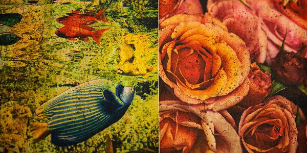 ColorfulCork Fische und Rosen auf Korkstoff