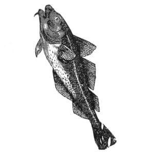 Thermofaxsieb Motiv Fisch-1